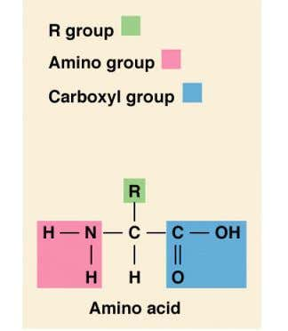 "structure Proteins are organic compounds made of "" amino acids "" joined together by "" peptide"