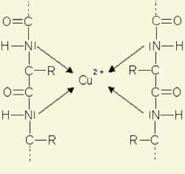 at least are required for the formation of this complex. Biuret complex Procedure & observation :