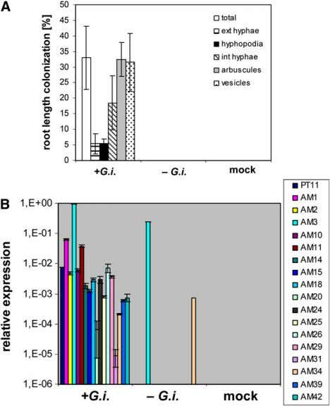 Figure 3. Analysis of the Systemic Expression of Rice Marker Genes. (A) Percentage root length