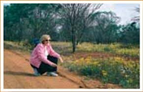 "Country Escapes in Western Australia Tours ""Exclusive Tours"" to see spectacular ""Wildflowers"" ""Perth's"