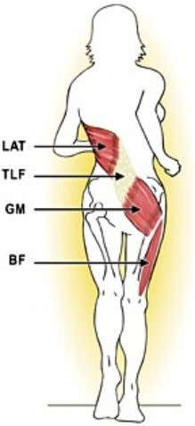adapta- tions as they apply to the body's spinal engine. Figure 4: Lats are stretched by