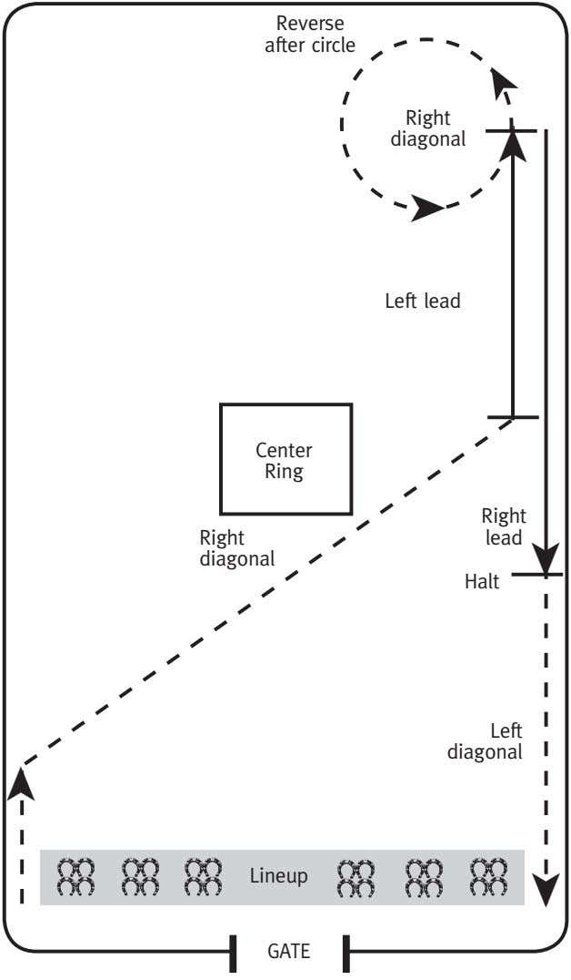 Reverse. after.circle Right diagonal ➤ Left.lead ➤ ➤ Center. Ring Right. Right. lead diagonal Halt