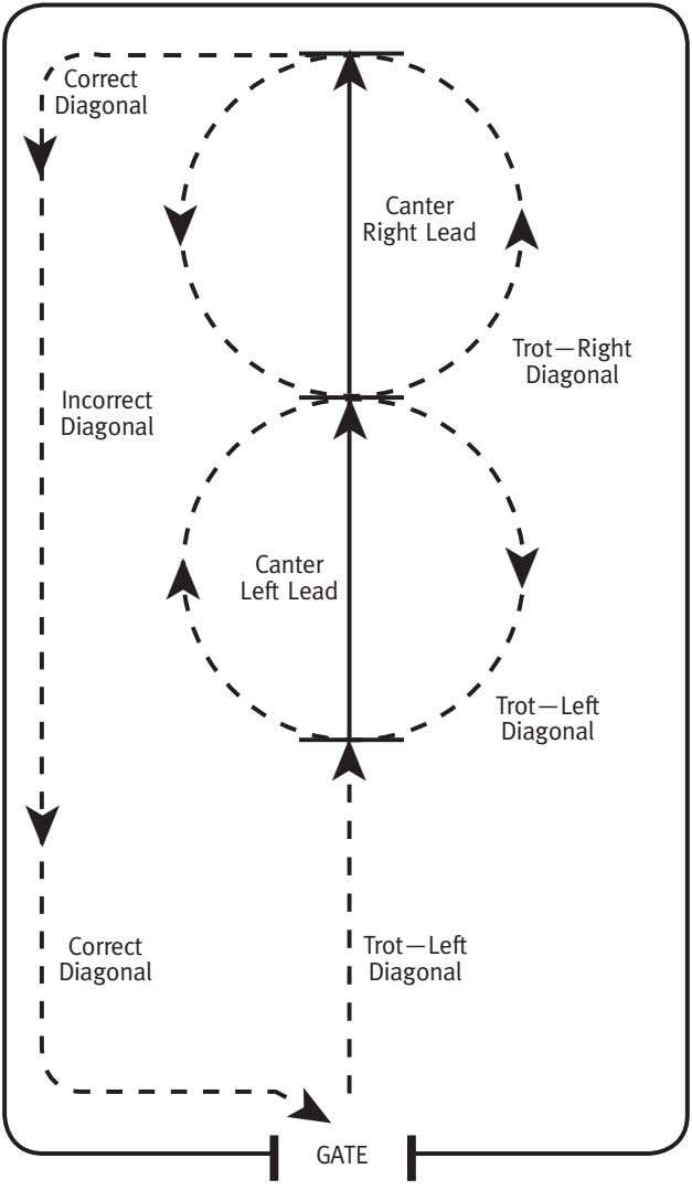 Correct. Diagonal Canter Right.Lead Trot—Right. Diagonal Incorrect. Diagonal Canter Left.Lead ➤