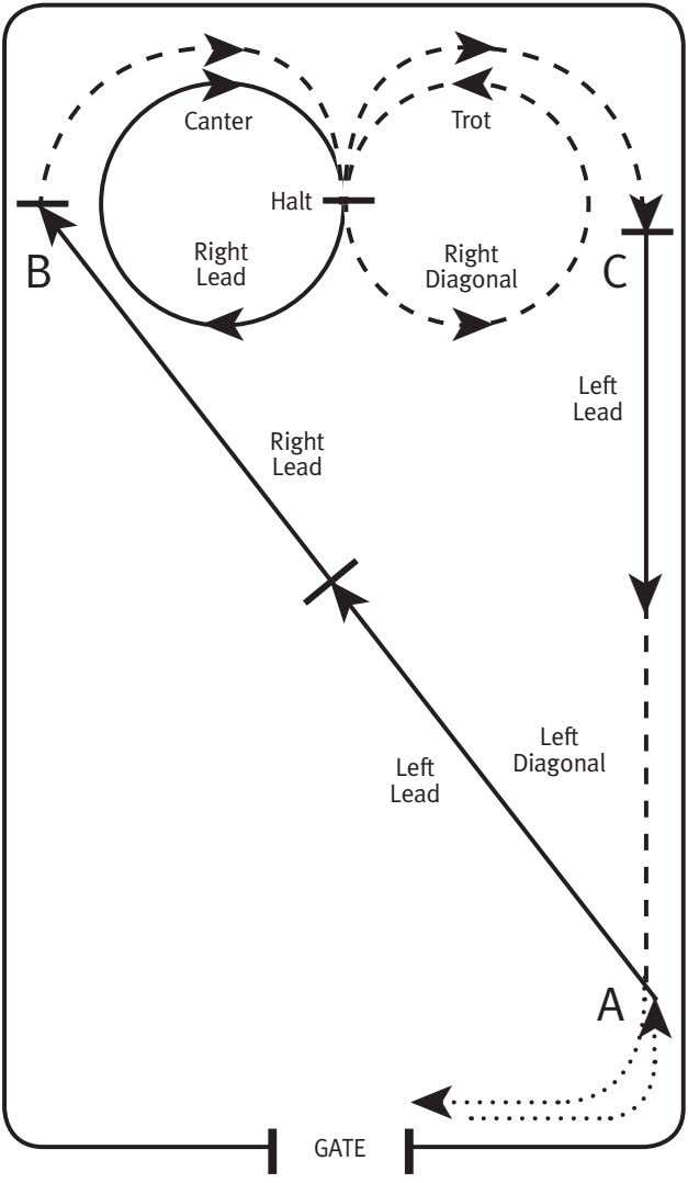 ➤ ➤ ➤ Canter Trot Halt Right Right B C Lead Diagonal ➤ Left Lead