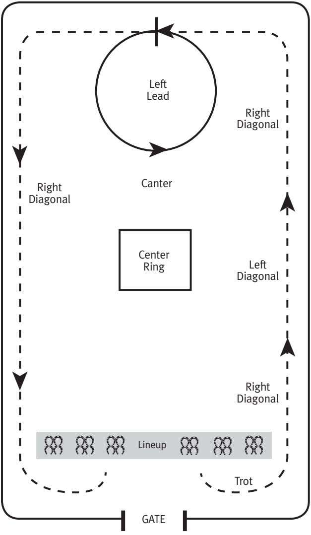 Left Lead Right Diagonal ➤ Canter Right Diagonal Center. Ring Left Diagonal ➤ ➤ Right