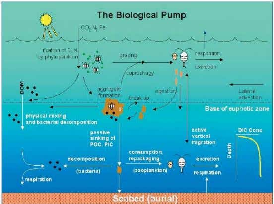 Figure 2: Components of biological pump from surface water into deep ocean seabed (Ducklow et
