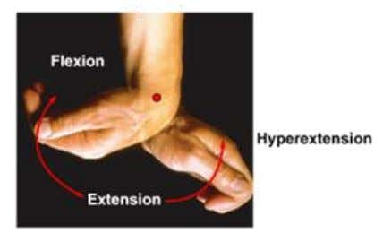 Flexion/Extension • Angular motion in A/P plane • Flexion reduces angle between elements • Extension Increases