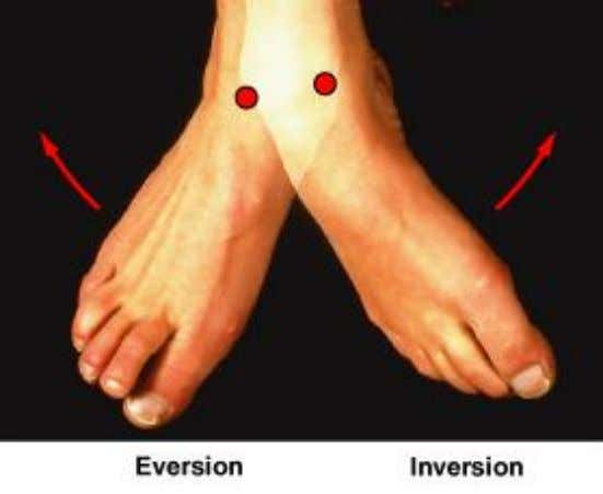 Inversion and Eversion • Inversion: – twists sole of foot medially • Eversion: – twists sole