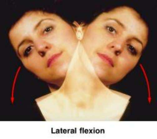 Lateral Flexion • Bends vertebral column from side to side Figure 9 – 5f