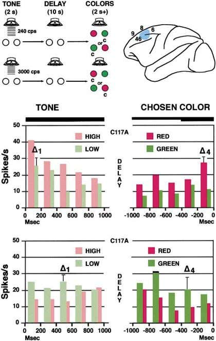 Review 327 Figure 7. Cross-Temporal Integration of Sound and Color in Frontal Cortex (Top, left) Sequence