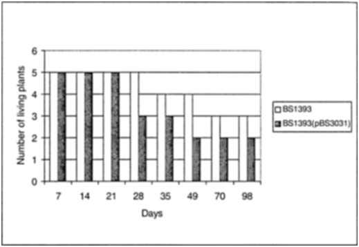 grown on soil containing 100 mg/kg of As Research Articles Fig. 4: Time course of the
