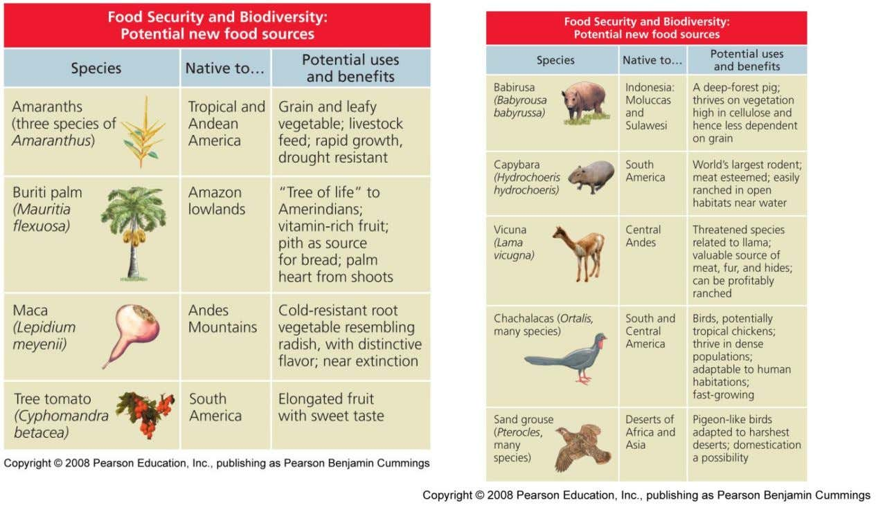 Benefits of Biodiversity • New food sources – Grains, fruits, vegetables, meat, fish