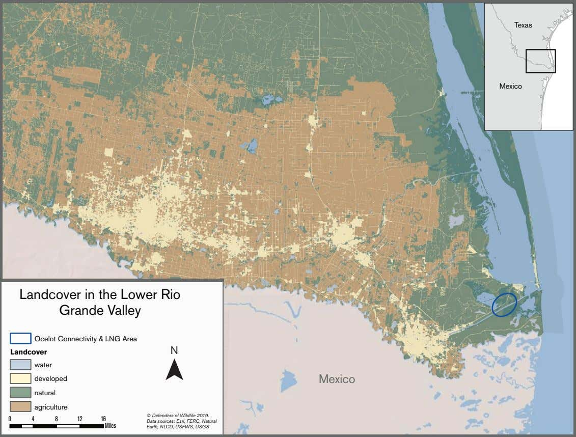 Texas Mexico Landcover in the Lower Rio Grande Valley Ocelot Connectivity & LNG Area N