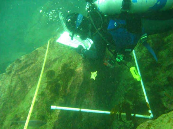 (98%), red urchins made up only 2% of the entire take. Photo 9. Kelp Project intern