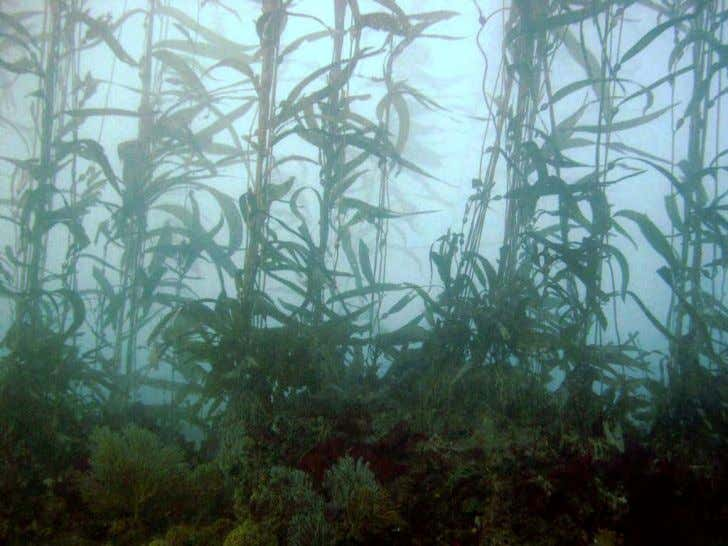 Photo 4 . Escondido Beach restoration site in 2006 after being restored. Giant kelp and