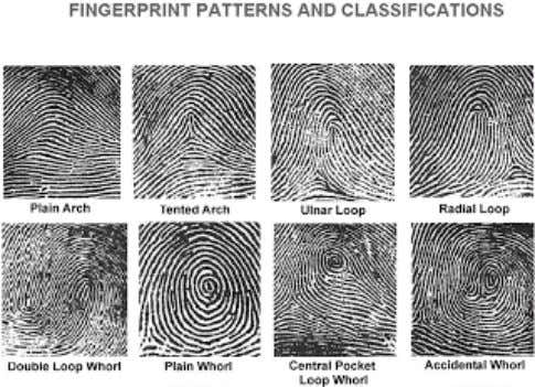 Fig 1: Various micro features of a finger print. Fig .2: Pattern variations present in a