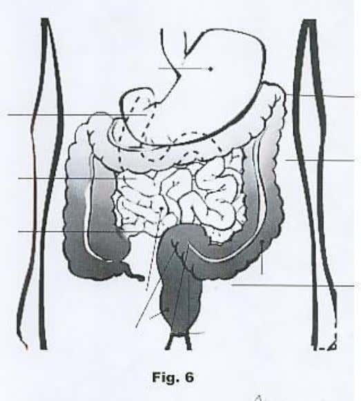 del estómago (Fig. Nº 5). INTESTINO DELGADO Y GRUESO - 29 - Created with novaPDF Printer