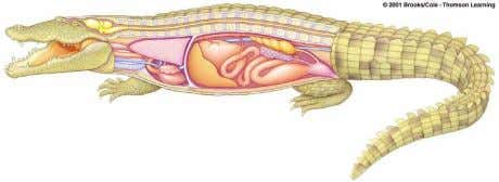 nearly old completed sexual reproduction (meiosis through fertilization) organ cleavage formation tadpole zygote