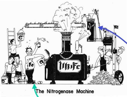 The operation of nitrogenase. The iron protein (Fe) takes electrons from central metabolism electron carriers and
