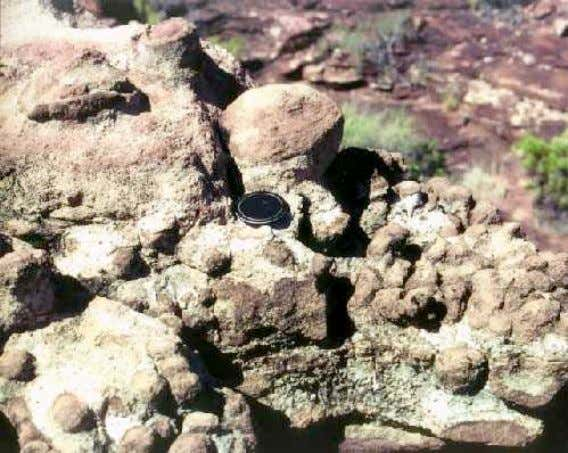 Diazotrophic bacteria in consortia Living stromatolites Middle Proterozoic formations of the Hakatai Shale in Grand Canyon