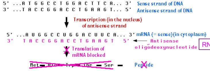 genes regulated by RNA interference 3.   In eukaryotes, fungi, plants, animals RNAi syahril@medic.upm.edu.my