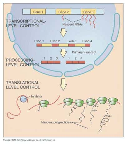 or expression at chromatin structure or at DNA level. Transcriptional Level Control - involves turning on