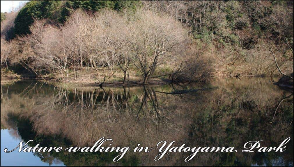 Nature walking in Yatoyama Park