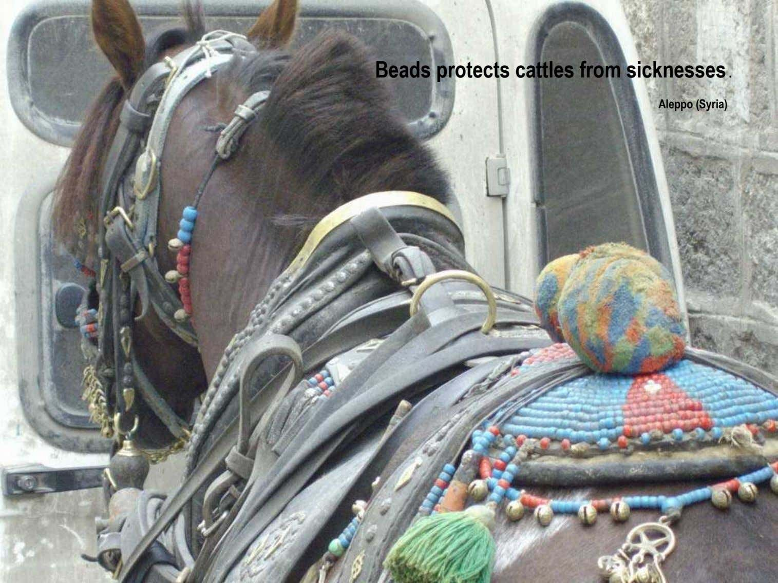 Beads protects cattles from sicknesses . Aleppo (Syria)