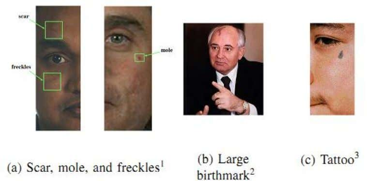 """class"" and ""individual"" characteristics. Fig 1.1 Examples of facial marks The class characteristics"