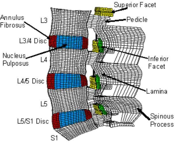 Figure 3.2: Finite element model of the intact L3-S1 spine. Figure 3.3: Mid-sagittal view of L3-S1