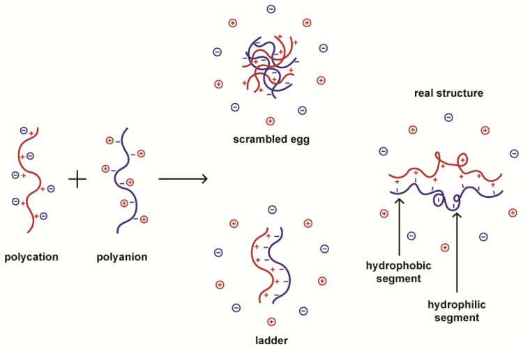 factors such as temperature and ionic strength. Figure 2. The structure of polyelectrolyte complexes.