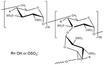 -(1,3) linkages account for the branching of dextran (Figure 6 ). Figure 6. The chemical structure