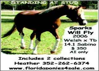 10419 CR 39 South, Lithia, FL 33547 www.EquineCorral.com NEW!! Stable & Trainer Directory 605 Charlie Wiggins