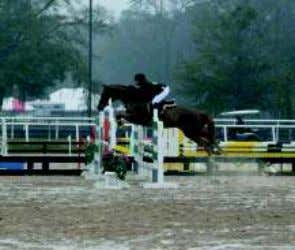 Jumping Clinic with Edd Lookingbill Pic 1- In our first photo, it is hard to see