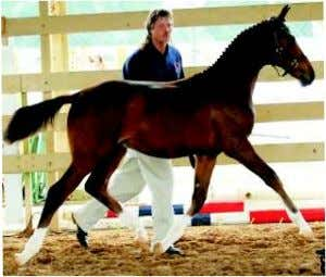 Florida Equestrian's first annual YOUNGSTOCK & FOAL ISSUE info@ cfequestrian.com 410-804-5813 www.cfequestrian.com