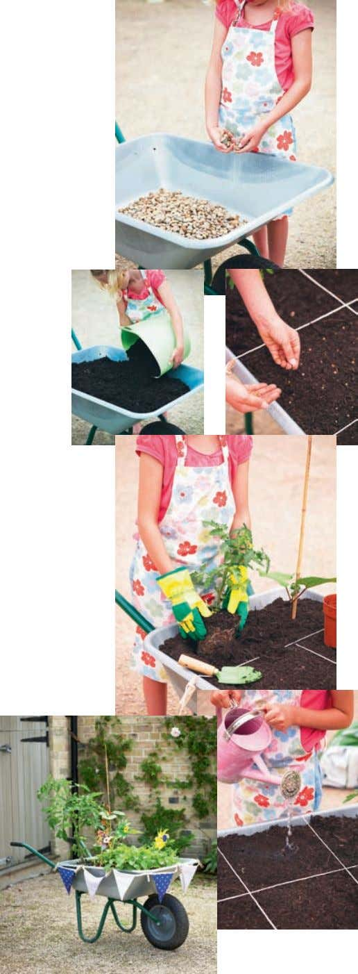specialising in children's gardening www.dawn-isaac.com June project: Wheelbarrow Vegetable Garden This project is