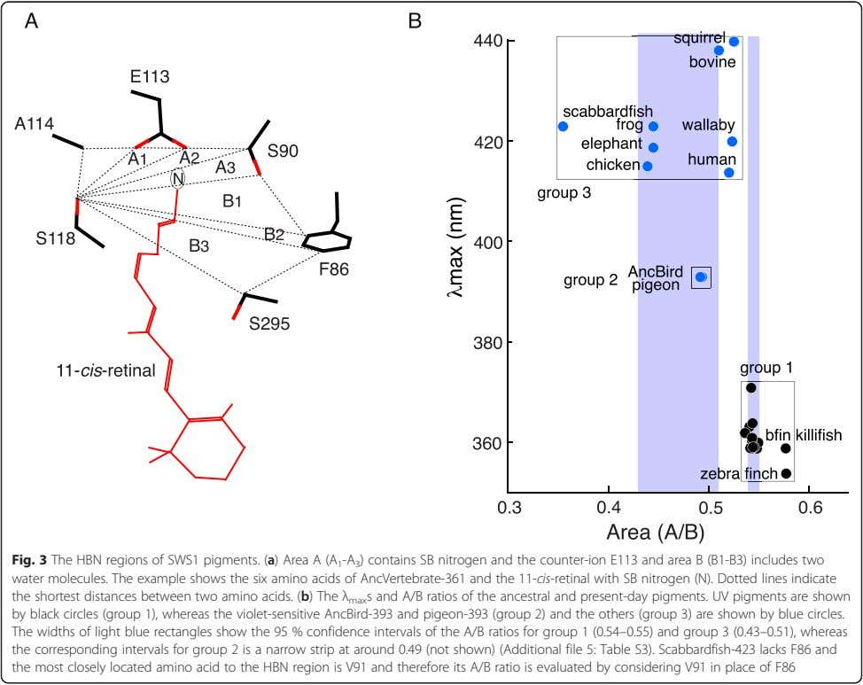 Fig. 3 The HBN regions of SWS1 pigments. ( a) Area A (A 1 -A