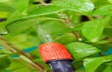Do not spray pesticides only on the upper surface of leaves. 17 Apply short persistent pesticides