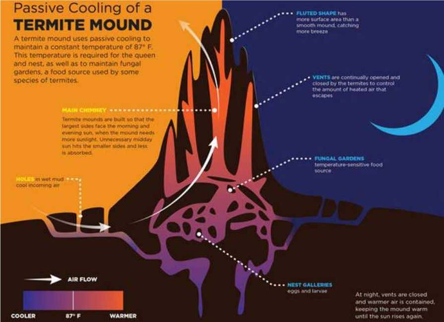 BIOMIMICRY ORGANISM LEVEL • Termite Mound and Temperature Regulation