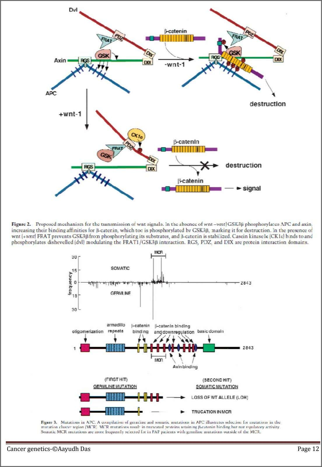 Cancer genetics-©Aayudh Das Page 12
