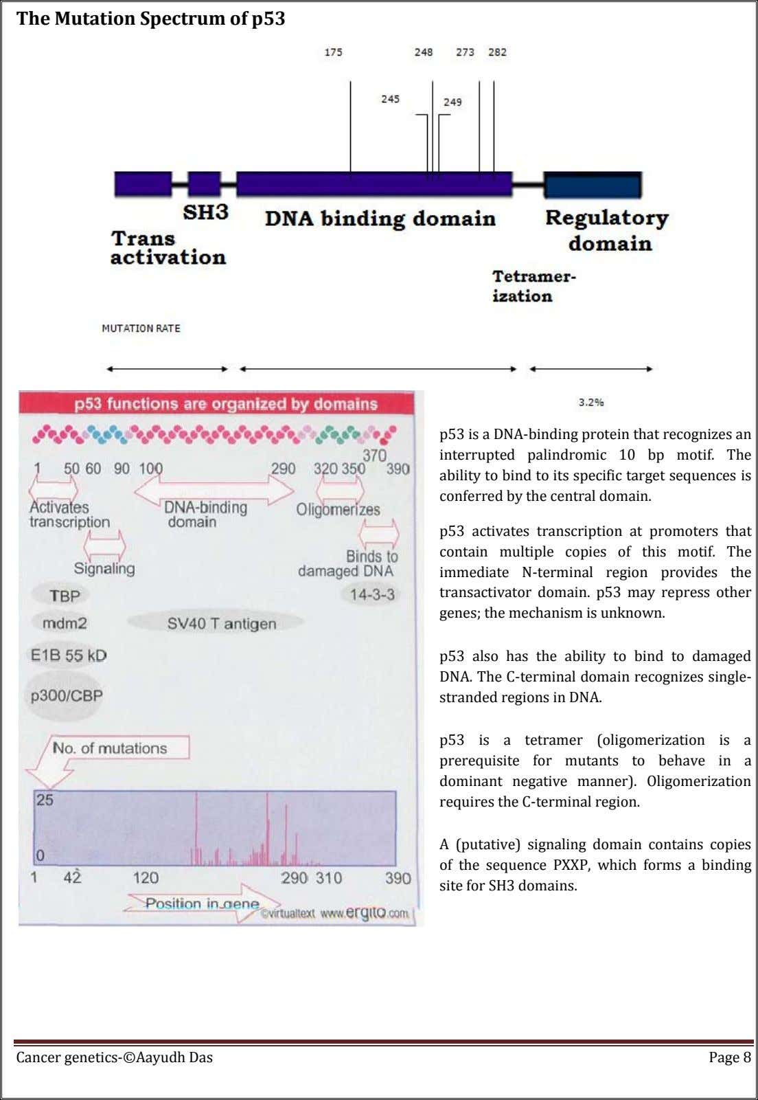 The Mutation Spectrum of p53 p53 is a DNA-binding protein that recognizes an interrupted palindromic 10