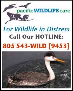 For Wildlife in Distress Call Our HOtline: 805 543-WilD [9453]