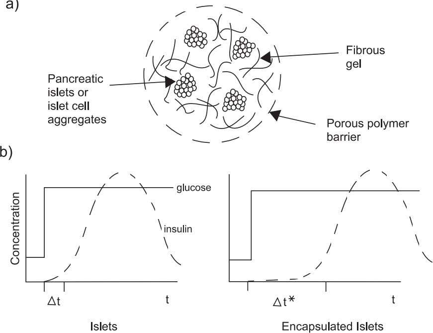 Objectives of Tissue Engineering 27 Figure 2.7. Insulin release from encapsulated islets. (a) Schematic of islet