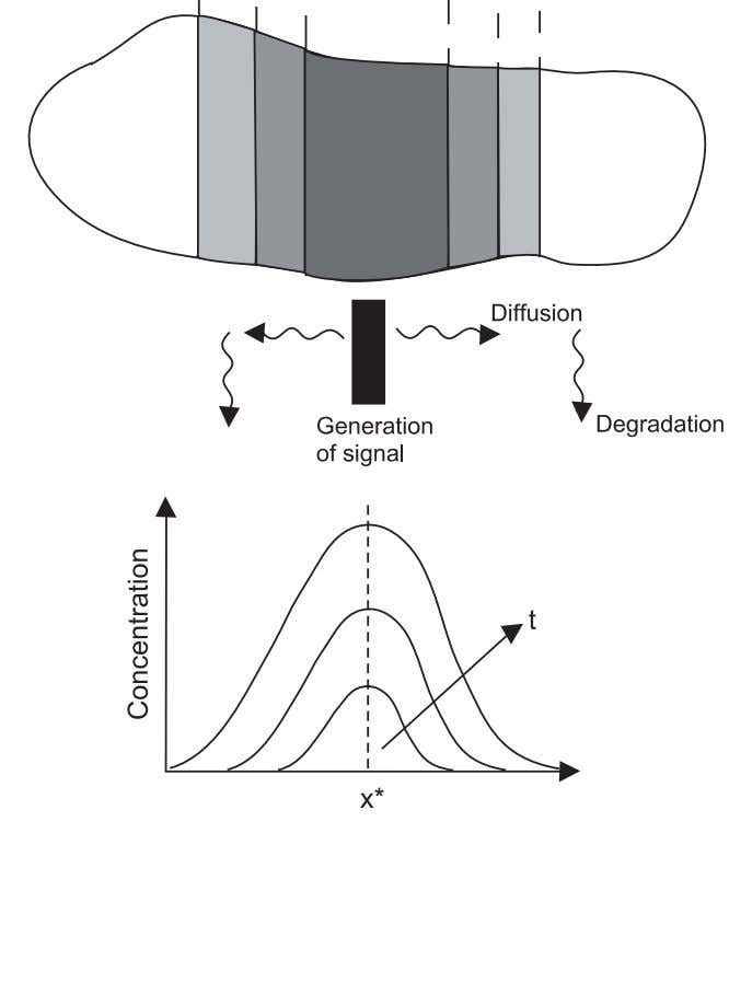 Elements of Tissue Development 57 Figure 3.17. Creation of a morphogen gradient by spatial separation of