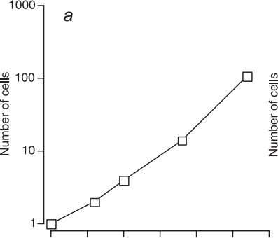 70 Tissue Engineering Fundamentals Figure 4.1. Growth of the developing human. The rate of growth is