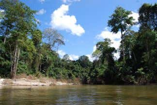(Wikipedia, The Free Encyclopedia) A water catchment area Ulu Langat Park Kinabatangan River Selangor State Park