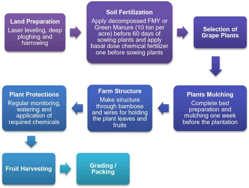 Land Preparation Laser leveling, deep ploghing and harrowing Soil Fertilization Apply decompossed FMY or Green