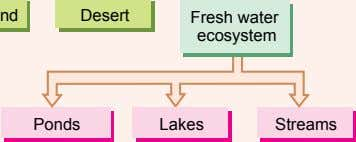 Desert Fresh water ecosystem Ponds Lakes Streams