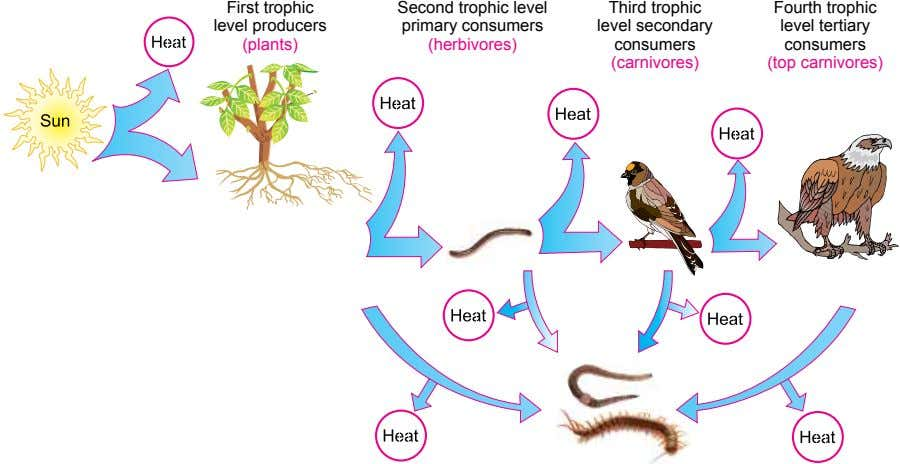 First trophic Third trophic Fourth trophic level producers level secondary level tertiary (plants) Second trophic