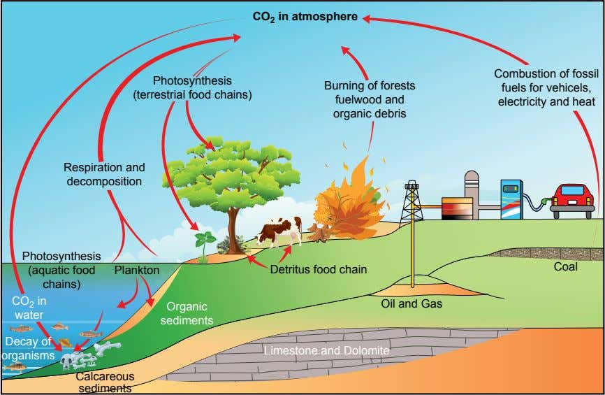 CO 2 in atmosphere Photosynthesis (terrestrial food chains) Burning of forests fuelwood and organic debris